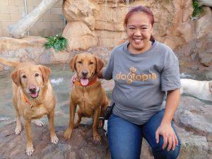 Anastasia Chan (Playroom Attendant) with Sandy (left) & Gunner – Labrador Retrievers