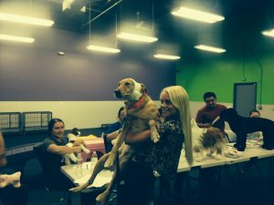 Dog First Aid & CPR Class with Playroom Attendants – Dogtopia of Anaheim Hills