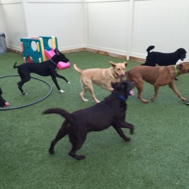 Dog Parks in Michigan or Dogtopia Indoor Dog Parks