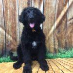 Puppy Socialization & Boarding in Birmingham MI