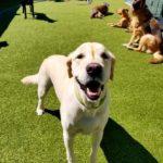 Will My Dog Love Doggie Day Care?