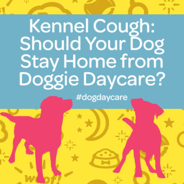 Kennel Cough In Dog Daycare