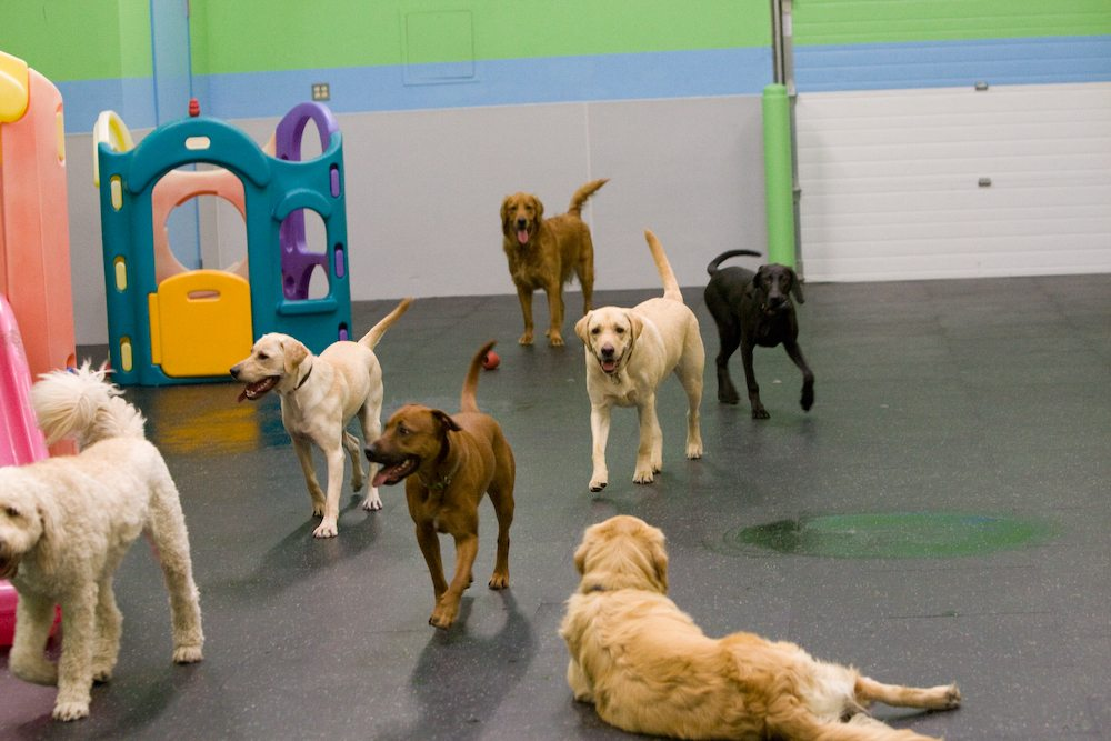 Active pups in the Gym playroom