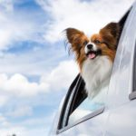 How to Help Your Dog Deal with Seasonal Allergies
