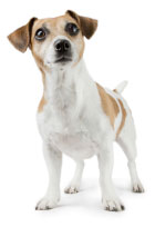Coming Soon Dog Icon