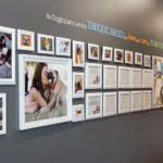 Dogtopia gallery