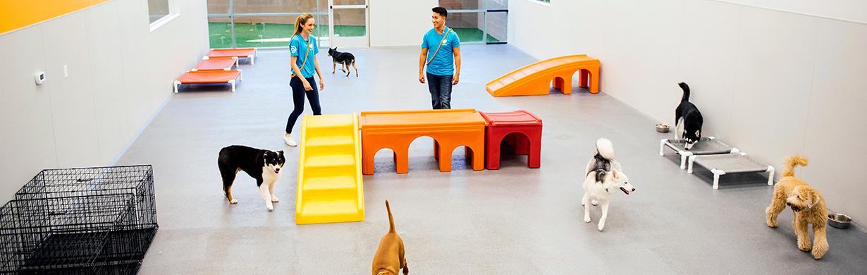 Dog Daycare, Spa, Boarding McLean | Dogtopia Tysons Corner