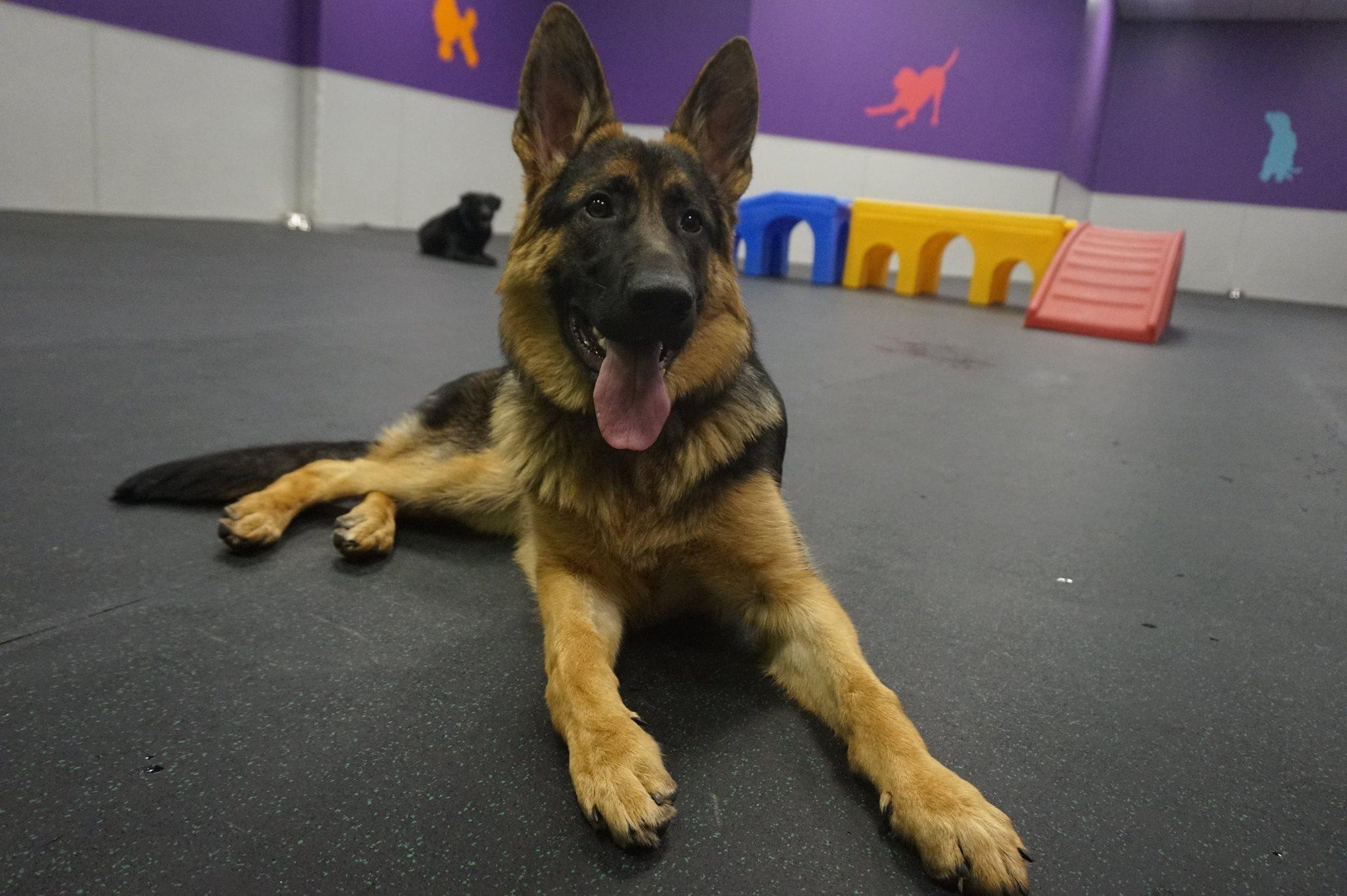 Dog Daycare Mississauga | Dogtopia Meadowvale - photo#41