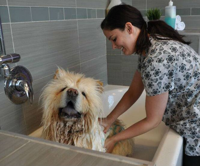 A dog getting groomed in Dogtopia's spa!