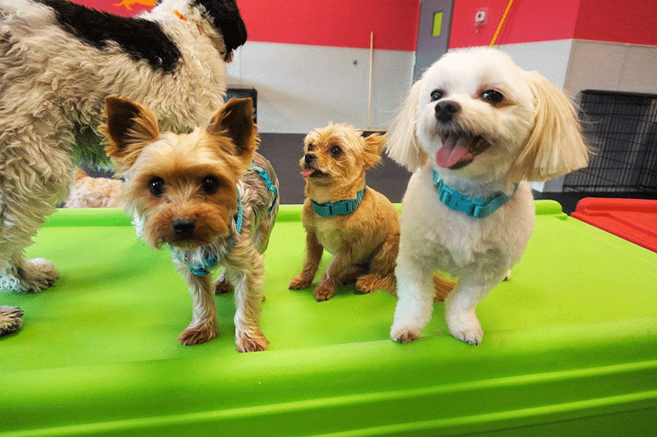 Happy smiles from the Dogtopia Meadowvale Romper playroom while the dogs play and socialize!