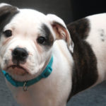 7 Essential Tips For Puppy Parents