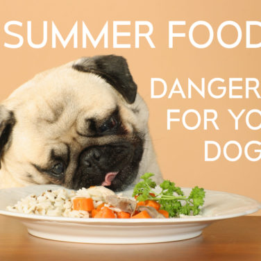 5 Summer Foods Dangerous For Your Dog