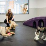 Dogtopia playroom