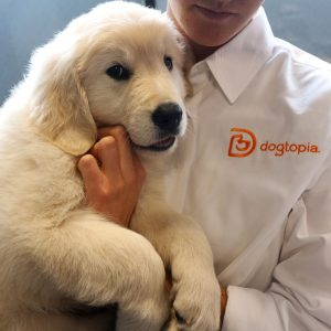 cute lab puppy at dogtopia newmarket