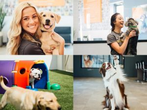 Dog boarding daycare spa dogtopia omaha west are you looking for a fun safe dog daycare and dog boarding facility to leave your pup in when you cant be with them dogtopia of omaha west is your solutioingenieria Image collections