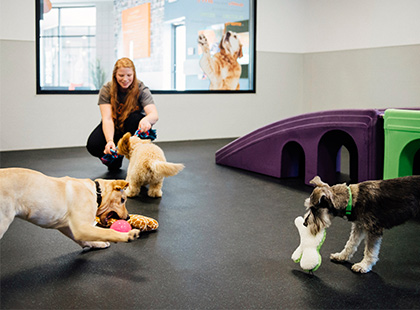 Careers at Dogtopia
