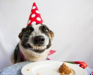 dog-birthday-cake2