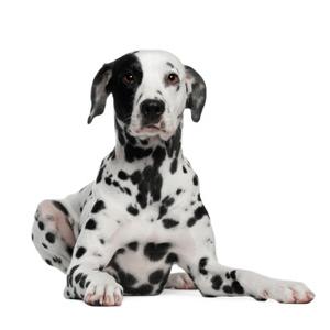 Dogtopia Miramar Homepage