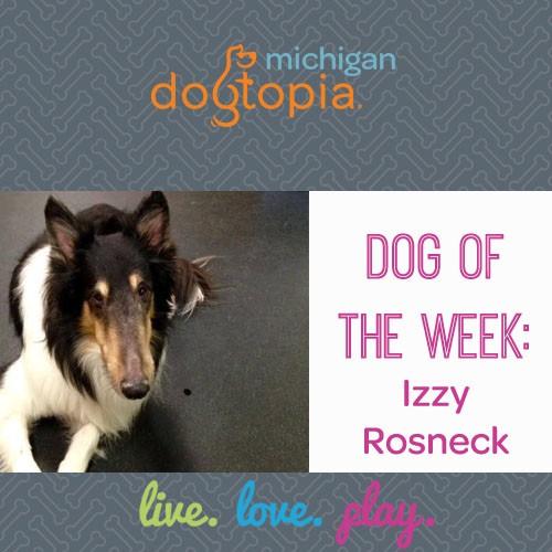 dog day care utcia dog of the week izzy rosneck