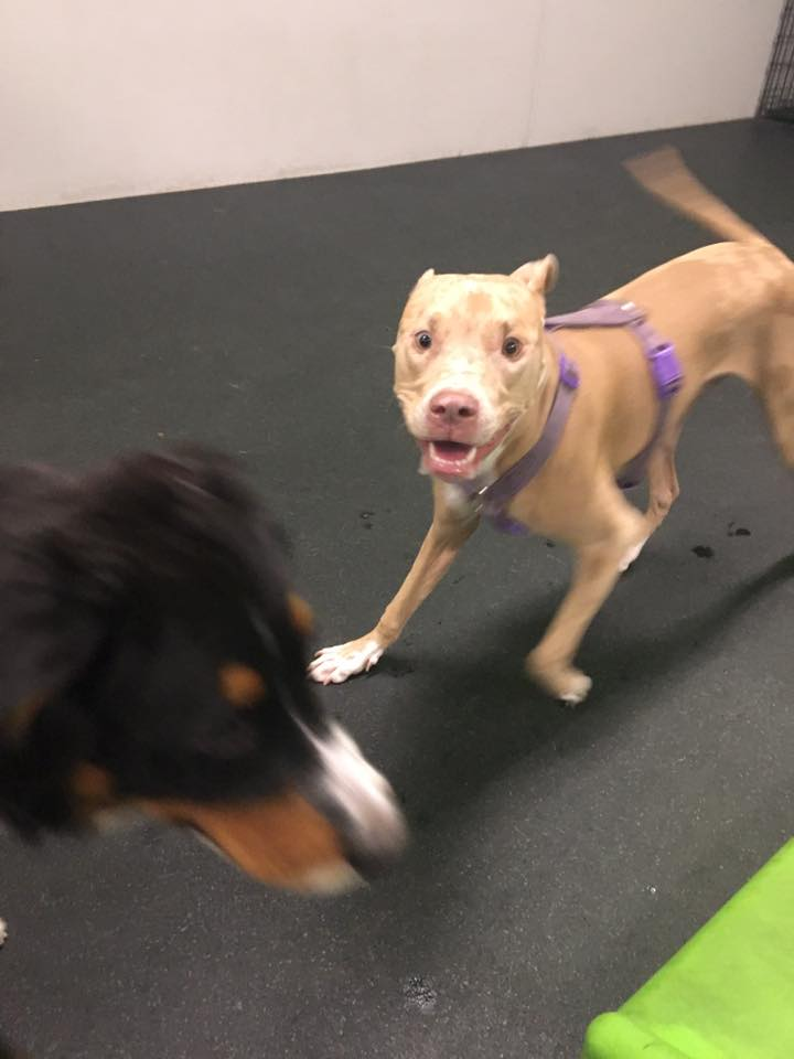 dog day care near me for exercise and socialization