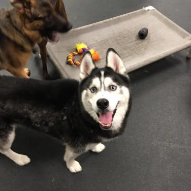 Finding Available Spots For Dog Boarding Near You - Utica