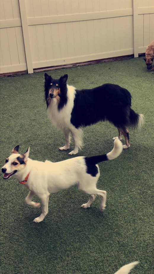 Dog Daycare And Boarding Near Me