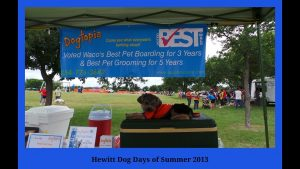 Hewitt dog Days of summer