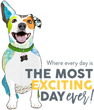 Where every day is the most exciting day ever!