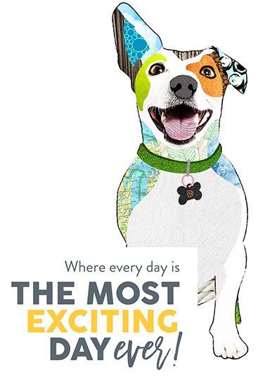 Our Locations Dogtopia