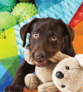 dogtoia_boarding-dog