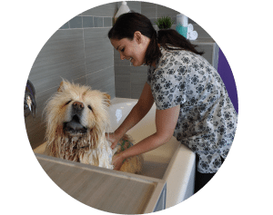 dog grooming mississauga reviews