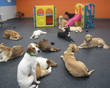 Does Indoor Play at Dogtopia Affect Housetraining?