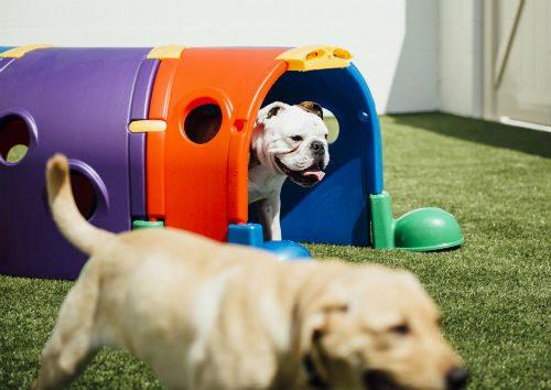 dog-daycare2