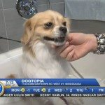 Breakfast Television Toronto Visits Dogtopia Erindale