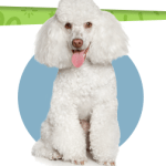 Infographics: The Best Small Dog Breeds for Kids