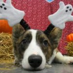 Making Your Dog's Halloween Less Frightful