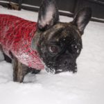 5 Winter Tips for Your Dog