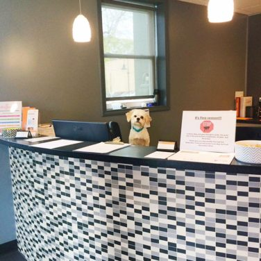 5 Ways to Prep for Take Your Dog to Work Day