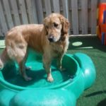 5 Tips to Help Your Dog Become a Better Swimmer