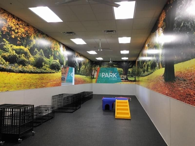 Dogtopia-of-Oro-Valley-playroom
