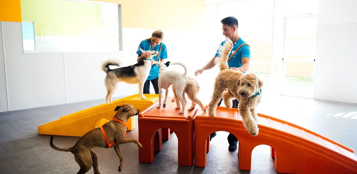 Dogs play with 2 Dogtopia workers