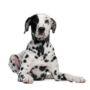 Dogtopia Waco homepage