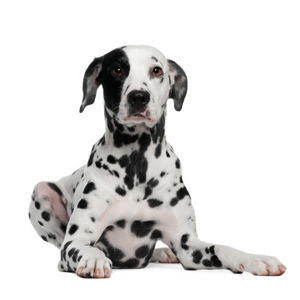 Dogtopia Springfield homepage